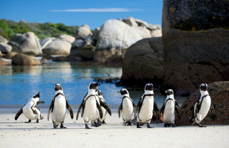 Best Cities Cape Town gallery image 2